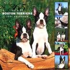 365 DAYS OF BOSTON TERRIERS 2007 WALL CALENDAR