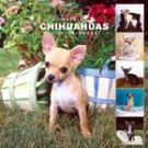 365 DAYS OF CHIHUAHUAS 2007 WALL CALENDAR