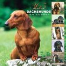365 DAYS OF DACHSHUNDS 2007 WALL CALENDAR
