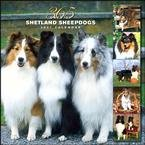 365 DAYS OF SHETLAND SHEEPDOGS 2007 WALL CALENDAR