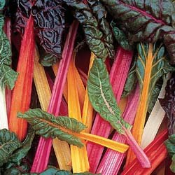 SWISS CHARD-BRIGHT LIGHTS*****500 SEED!