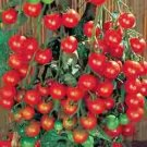 TOMATO-CHERRY-SUPERSWEET 100****250 SEED!