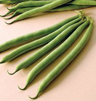 GREEN BEAN-E-Z PICK****500 SEED