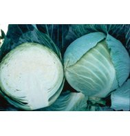 CABBAGE-STORAGE*******500 SEED!