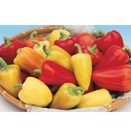 PEPPER-SWEET*ANTOHI ROMANIAN***HEIRLOOM*****250 SEEDS!