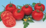 TOMATO*MOSKVICH****ORGANIC & HEIRLOOM**500 SEED!