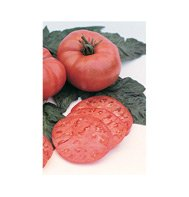 TOMATO*RED BRANDYWINE***ORGANIC & HEIRLOOM****500 SEED!