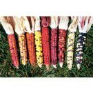 CORN-ORNAMENTAL*PAINTED MOUNTAIN***ORGANIC & HEIRLOOM**100 SEED!
