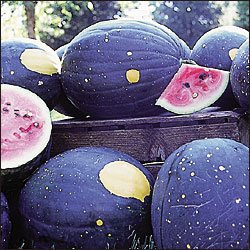 WATERMELON**MOON & STARS***HEIRLOOM****10 SEED