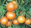 TOMATO*YELLOW BRANDYWINE**HEIRLOOM & ORGANIC***30 SEED