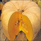 PUMPKIN**AUSTRALIAN BUTTER SQUASH**HEIRLOOM**100 SEED