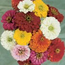 ZINNIA**CARROUSEL***HEIRLOOM***150 SEED