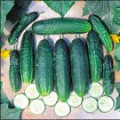 CUCUMBER**A&C PICKLING**HEIRLOOM***30 SEED
