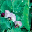 PEA-DWARF GRAY SUGAR***HEIRLOOM***100 SEED