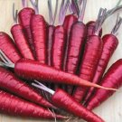 CARROT-DRAGON***HEIRLOOM & ORGANIC****250 SEED