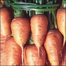 CARROT-OXHEART***HEIRLOOM****1,000 SEED