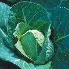 CABBAGE-EARLY JERSEY WAKEFIELD***HEIRLOOM****700 SEED