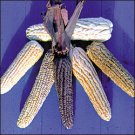 CORN-POD CORN***HEIRLOOM*****300 SEED