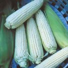 CORN-STOWELL'S EVERGREEN**HEIRLOOM & ORGANIC****250 SEED