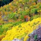 Copper Harbor in Fall--Brockway Mountain--#1