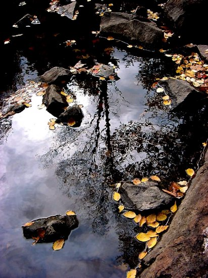 Fall Leaves--#2