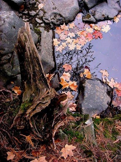 Fall leaves--#3