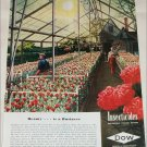 1948 Dow Chemical Beauty ad