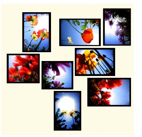 """Flowers"" custom wall collage (8 framed pieces)"