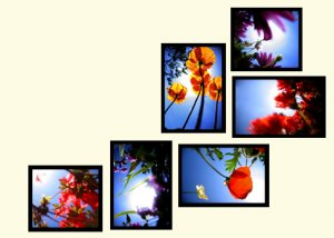 """""""Flowers"""" custom wall collage (6 framed pieces)"""