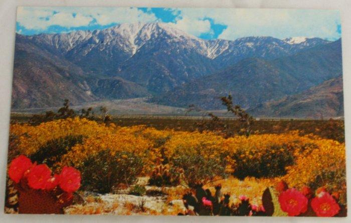 """Desert Wildflowers"" VINTAGE POSTCARD Southwest US"