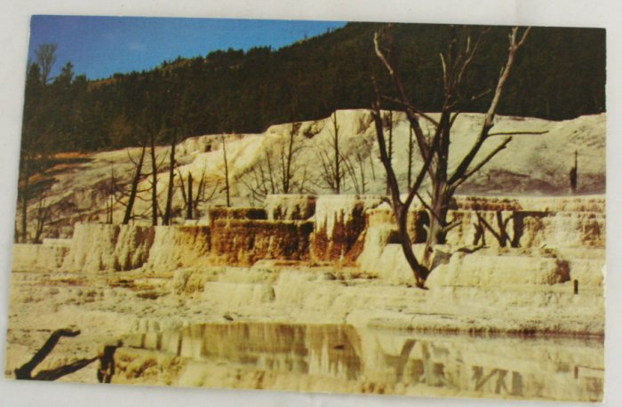 """Angel Terrace"" 50s VINTAGE POSTCARD Yellowstone"