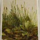 POSTCARD Germany-Albrecht Durer-Grasses, Leaves