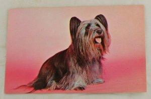POSTCARD Pure Bred Skye Terrier-Louis & Virginia Kay