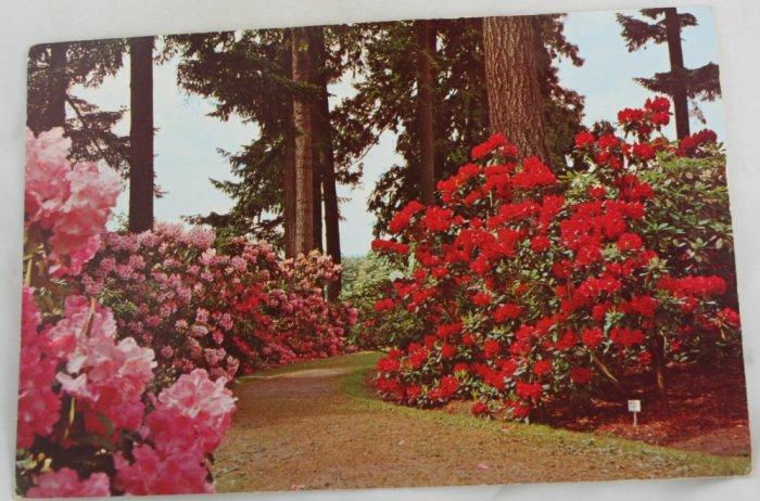 POSTCARD Rhododendron Test Gardens, Portland OR