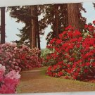 POSTCARD Rhododendron Test Gardens, Portland OR