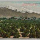 Hand Colored Postcard VINTAGE POSTCARD Orange Groves