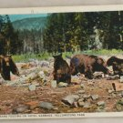 White Border-VINTAGE POSTCARD-Yellowstone-Bears Garbage