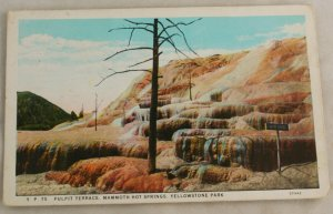 White Border-VINTAGE POSTCARD-Yellowstone-Pulpit Terrace