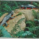 POSTCARD USA Oregon,Prehistoric Gardens,Coast Hwy 101 ROADSIDE ATTACTION