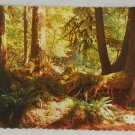 POSTCARD USA Washington,Olympic Nat Park,Rainforest