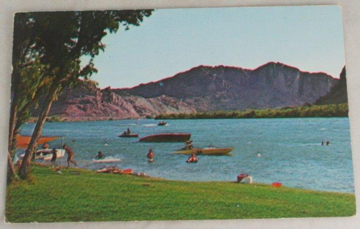 POSTCARD USA Arizona,Buckskin State Park,Colorado River