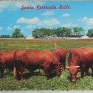 POSTCARD Texas,Santa Gertrudis Bulls Chrome 1985