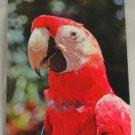 POSTCARD Florida,Miami,Parrot Jungle,Parrot