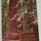 POSTCARD California,Guerneville,Colonel Armstrong Tree