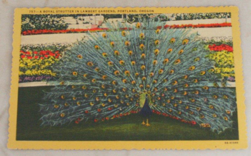 VINTAGE POSTCARD Oregon,Portland,Lambert Garden Peacock 1949 Curteich