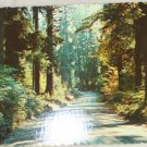VINTAGE POSTCARD Washington,Olympic Peninsula,Hoh Forest