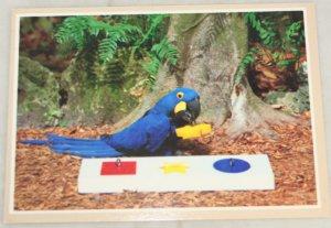 VINTAGE POSTCARD Florida,Parrot Jungle,Aurora