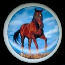 Gorgeous BROWN HORSE Against BLUE SKY Background Ceramic Knobs Handles Pulls - Free Shipping