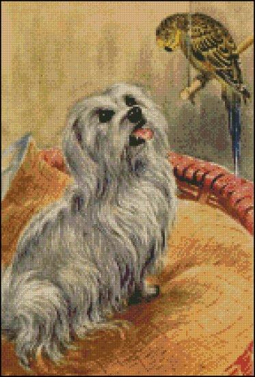 DOG MALTESE cross stitch pattern