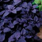 $5 Persian Purple Basil plant seed guaranteed to grow